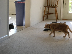 Showdown at the House of Bastardville